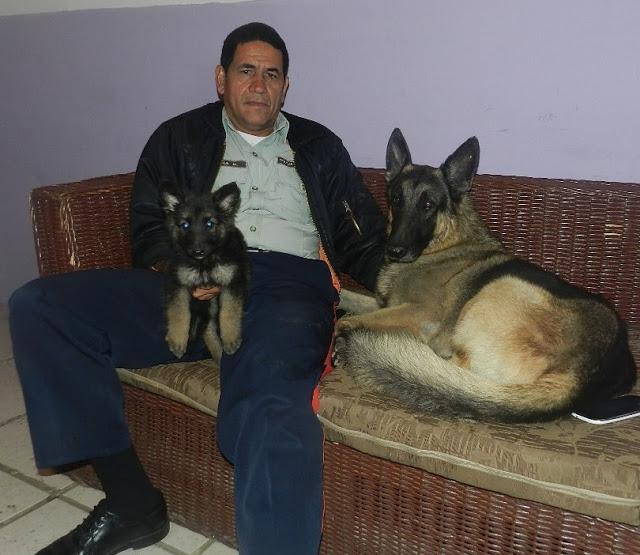 Brigada canina del Iapatmi activa para las festividades pascuenses