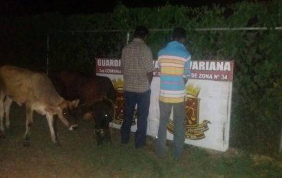 Detenidos Por Robar Ganado y Transportar Carne.