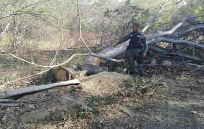 Funcionarios del Destacamento 342 impidió delitos ambientales