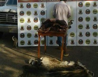 Guardia Nacional Bolivariana pone fin a los robos de ganado